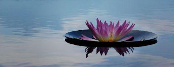 water flower floating