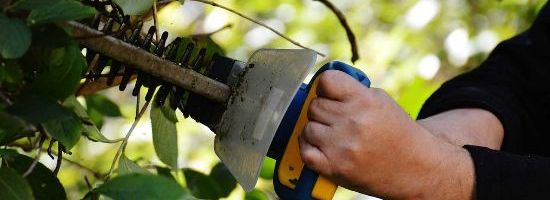 Strata Title Trees and Hedges - What Can & Can't the OC do?