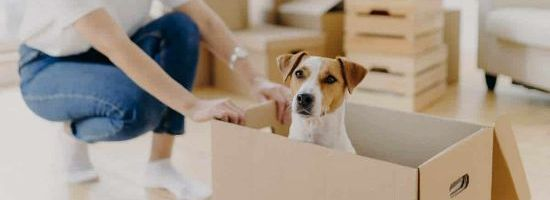 Strata Living and Pet By-Laws - Where Do We Stand Now?