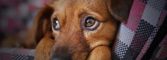 Rescinding the Keeping of Pets ByLaw