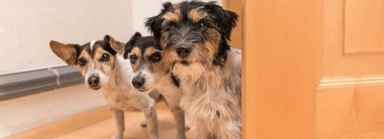 Keeping Pets in Strata Units