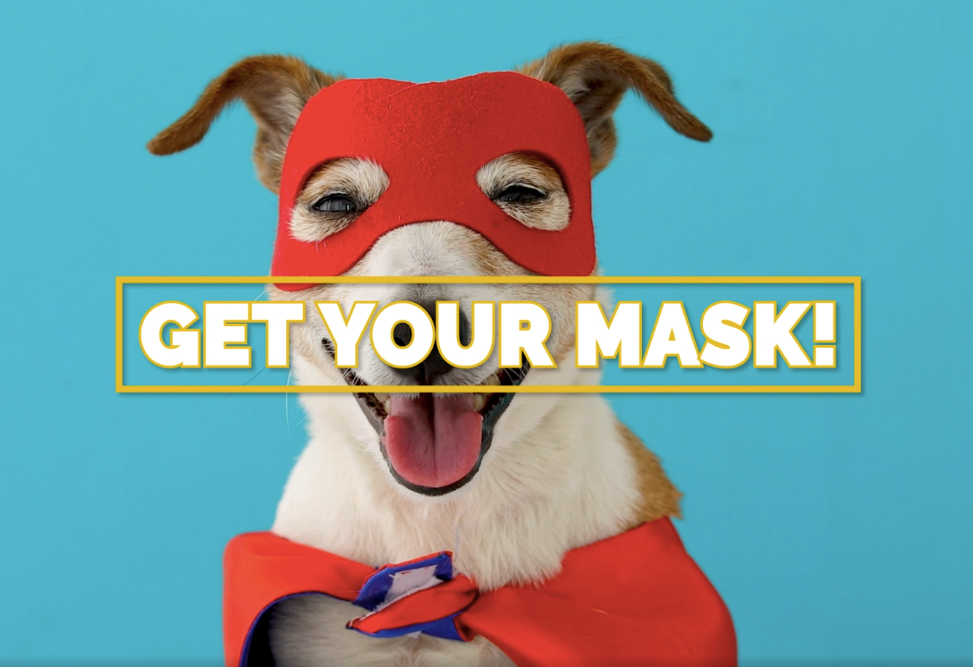 Photo of a dog wearing a mask and a cape