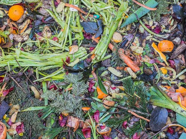 So what can you do to recycle your organic waste?
