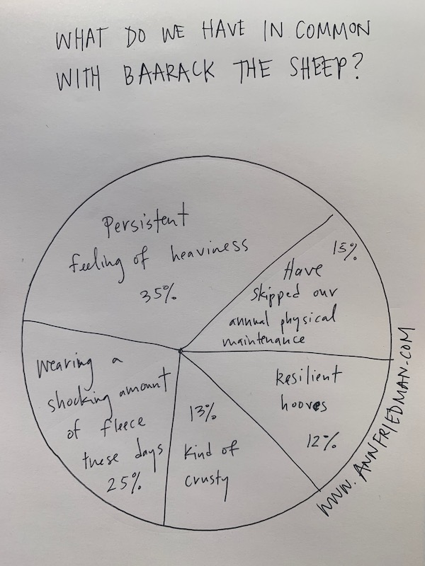 Pie chart: What do we have in common with Baarack the Sheep? 35% Persistent feeling of heaviness, 25% wearing a shocking amount of fleece these days, 15% Have skipped our annual physical maintenance, 13% Kind of crusty, 12% Resilient hooves