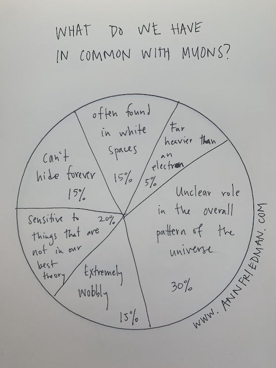What do we have in common with muons? 15% often found in white spaces, 5% far heavier than an electron, 30% unclear role in the overall pattern of the universe, 15% extremely wobbly, 20% sensitive to things that are not in our best theory, 15% can't hide forever