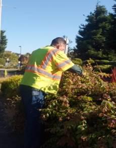 MBP Median Hand Select Pruning
