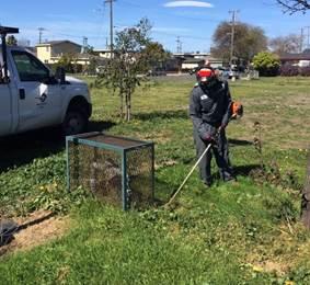 Weed abatement Southside Park