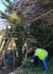 Boorman Park pruning