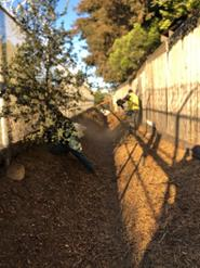 Easement cleanup