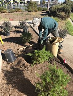 Planting at LEP 2