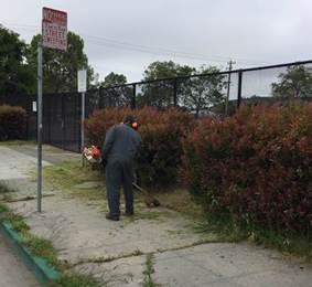 Weed abatement MLK Park
