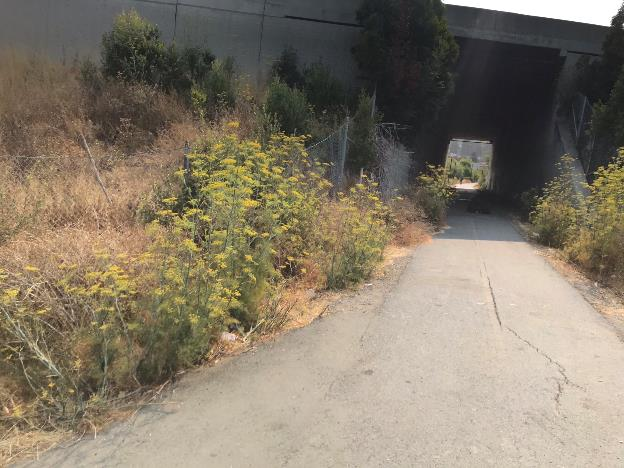 A picture containing outdoor, road, tree, ground    Description automatically generated