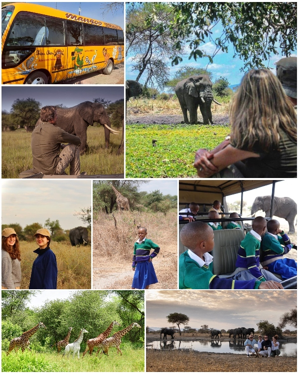 Collage of photographs taken at Chem Chem Safaris