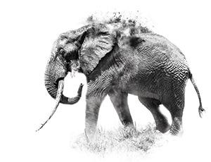 Elephant print by Riccardo