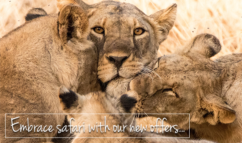 Embrace the lifestyle of safari with our new offers...