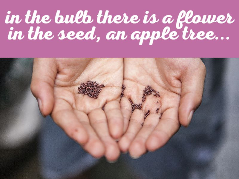 In the bulb there is a flower In the seed, an apple tree...