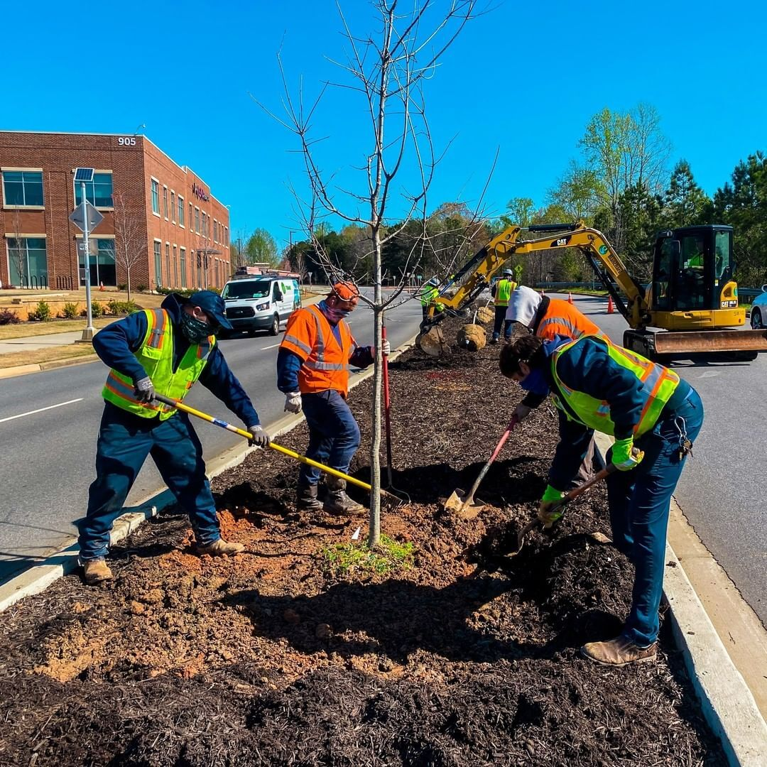 Crew of four in high vis vests shoveling dirt around a newly planted tree