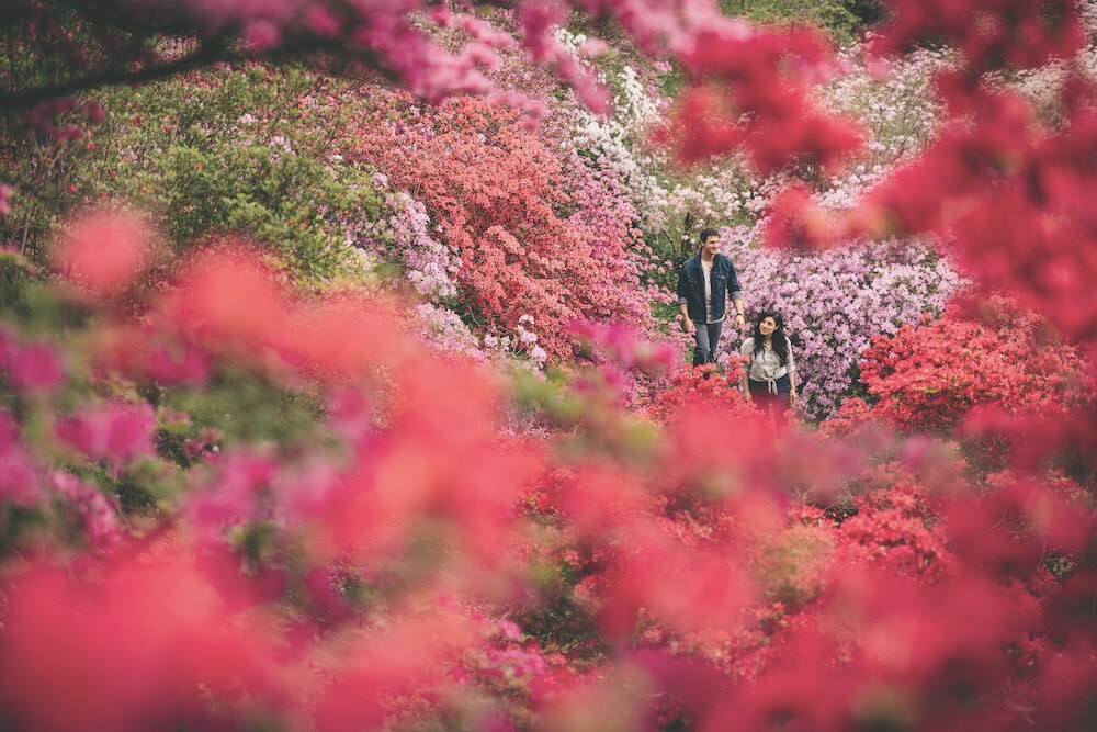 The Biltmore's Azalea Garden