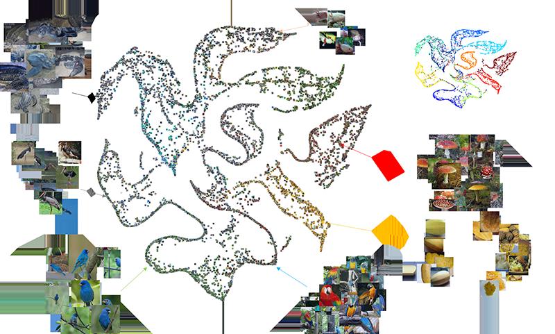 imagenet visualization