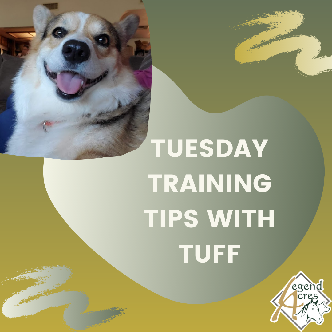 Tuesday Training Tips with Tuff