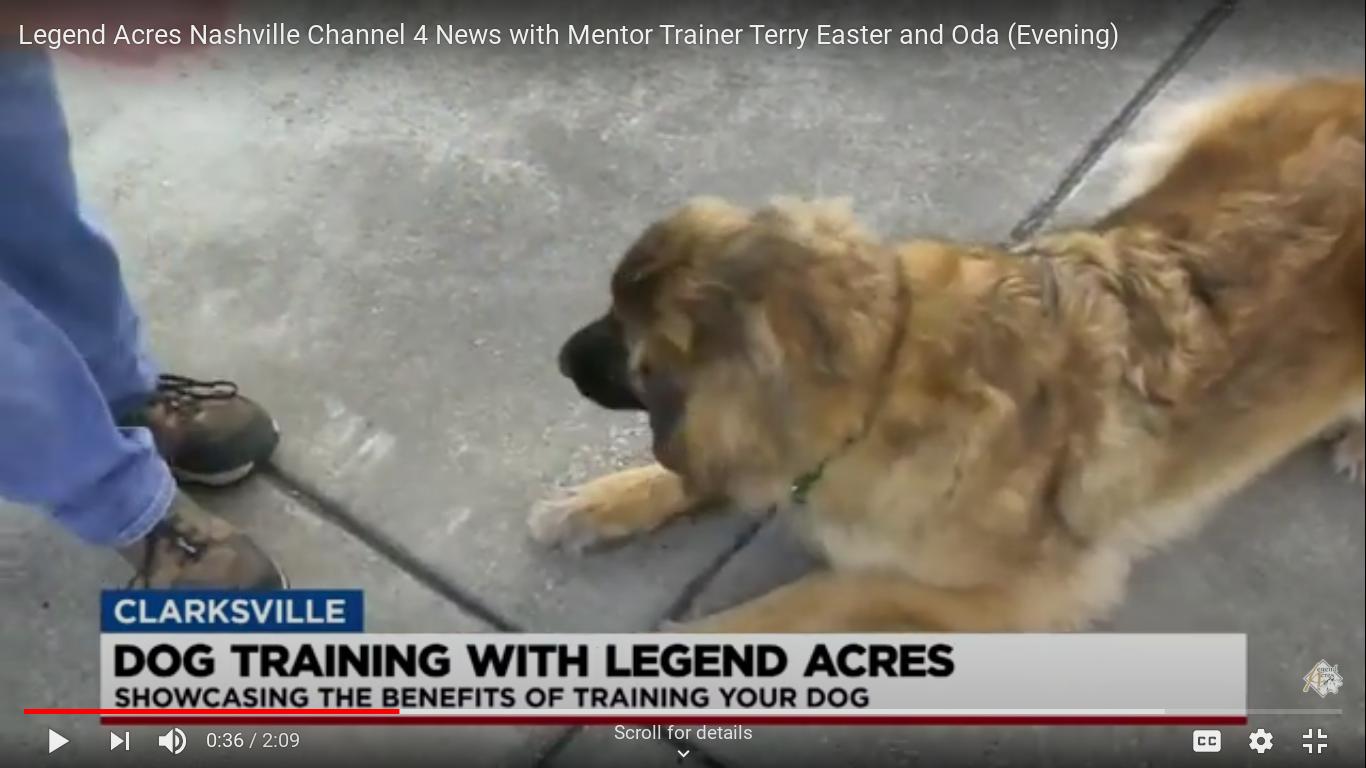 Channel 4 News Nashville and Legend Acres