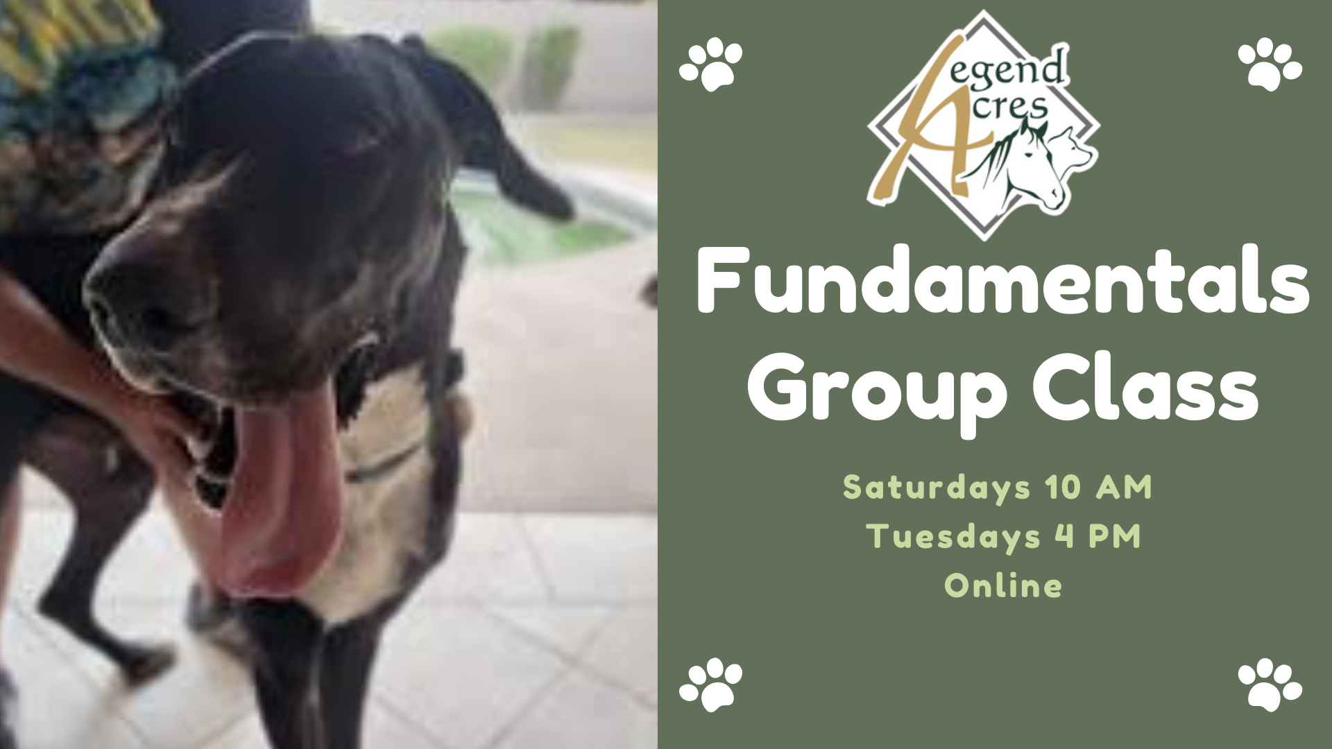 Online Fundamentals Group Classes