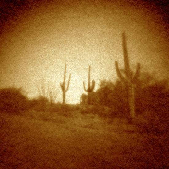Saguaro Way