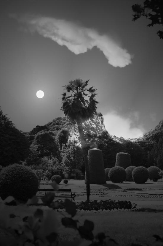 Palm Garden Night