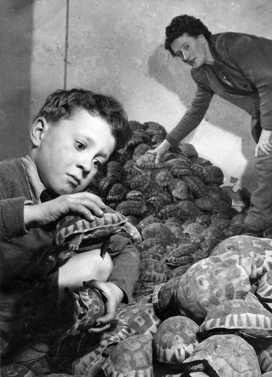 The Boy Who Loves Tortoises