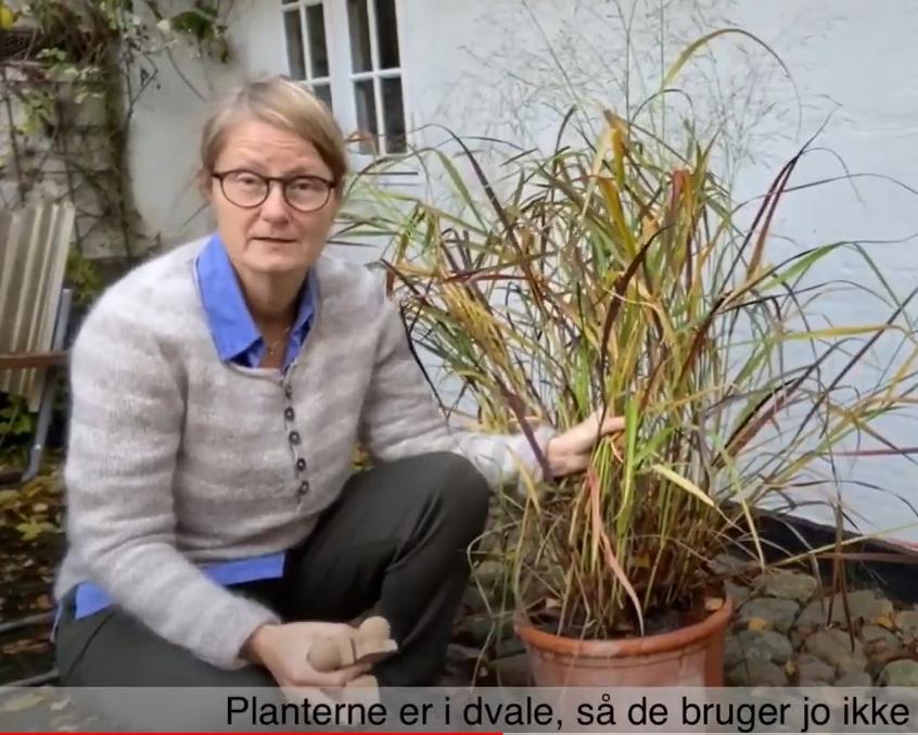 Ny video – overvintring af krukker