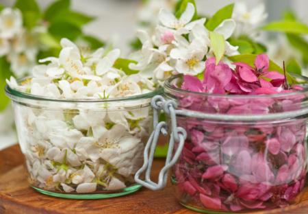 Haveprojekt høst blomster til at lave aromatisk blomstervand