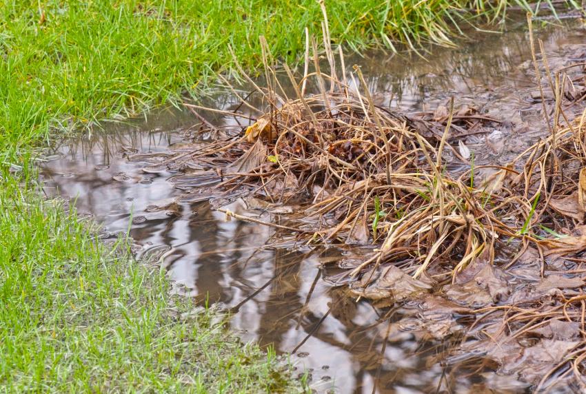 Red dine planter fra druknedøden