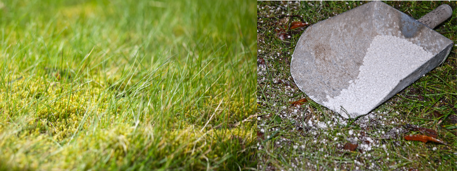 Kalk til græsplænen