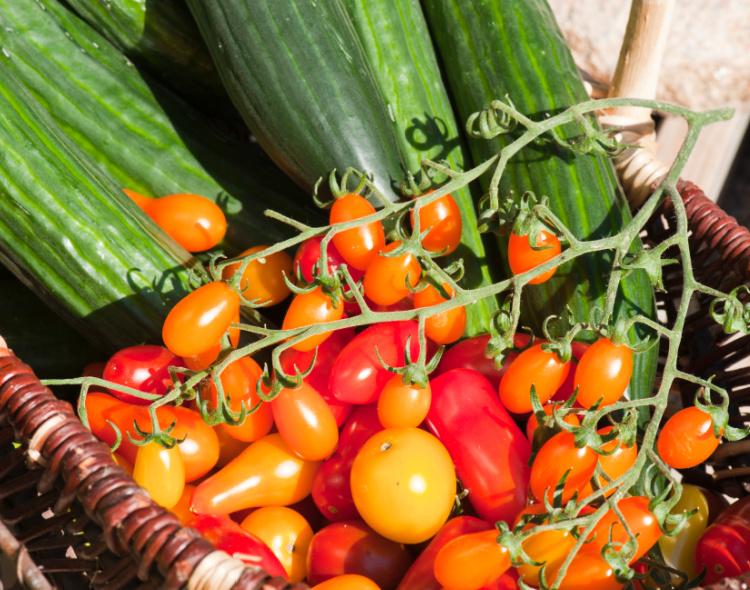 Sådan får du succes med at dyrke agurker og tomater – VIDEO