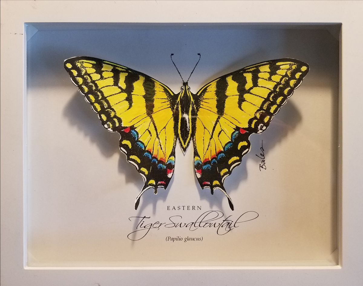 tiger swallowtail artwork