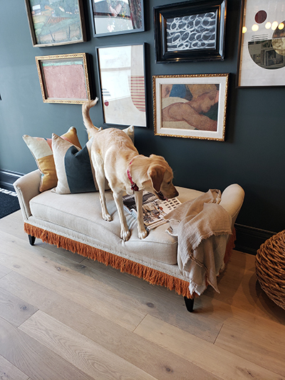 Chloe, our sometimes design assistant at GGI - Gillian Gillies Interiors
