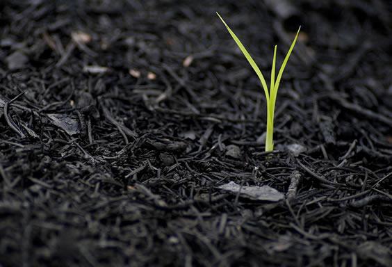 Seedling growing.