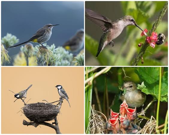 Happy birds in nature