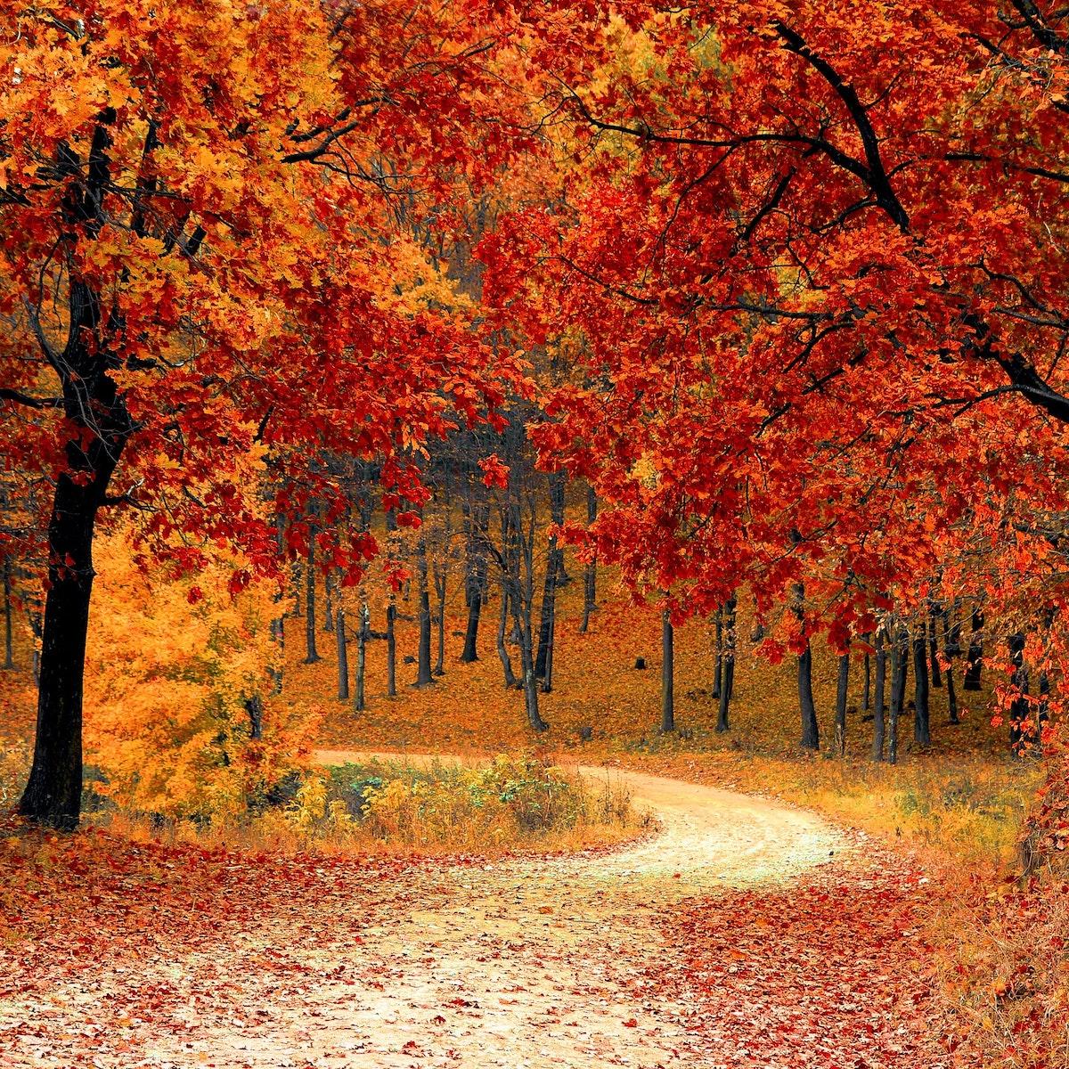 Autumn Ways: An In-Person, Outdoor Mini-Retreat