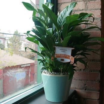 Plant on windowsill at CSI Annex.
