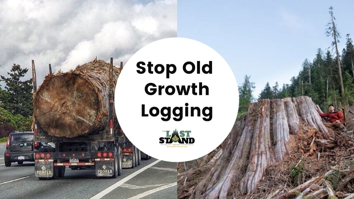 Stop Old Growth Logging