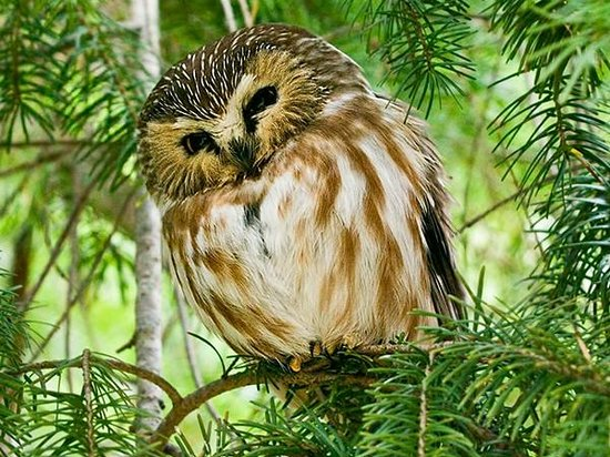 An owl perched on a branch and head turned slightly