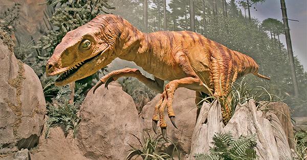 Did Velociraptors Hunt in Packs?