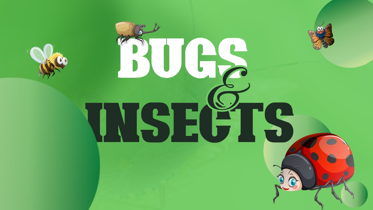 Bugs & Insects - Candyland Aldine March 2021 Curriculum