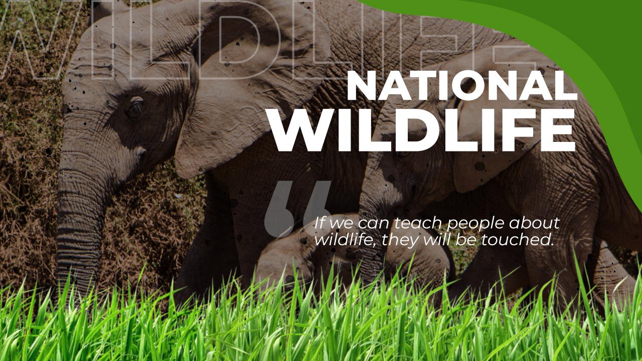 National Wildlife - Curriculum - Candyland Aldine