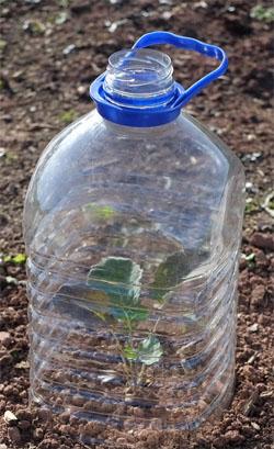 Cloche Plastic Bottle DIY