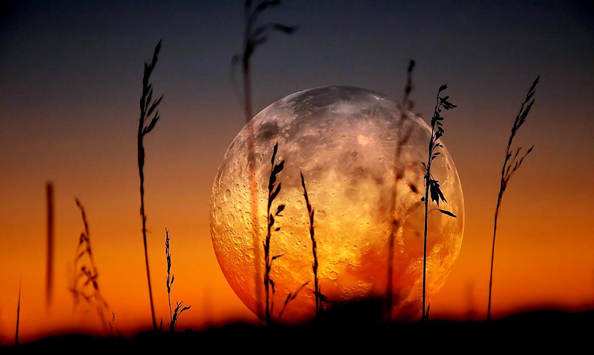 Aquarius-Leo 2021 Full Buck Moon!