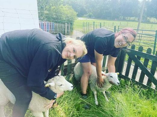 Liz Mitchell with sheep