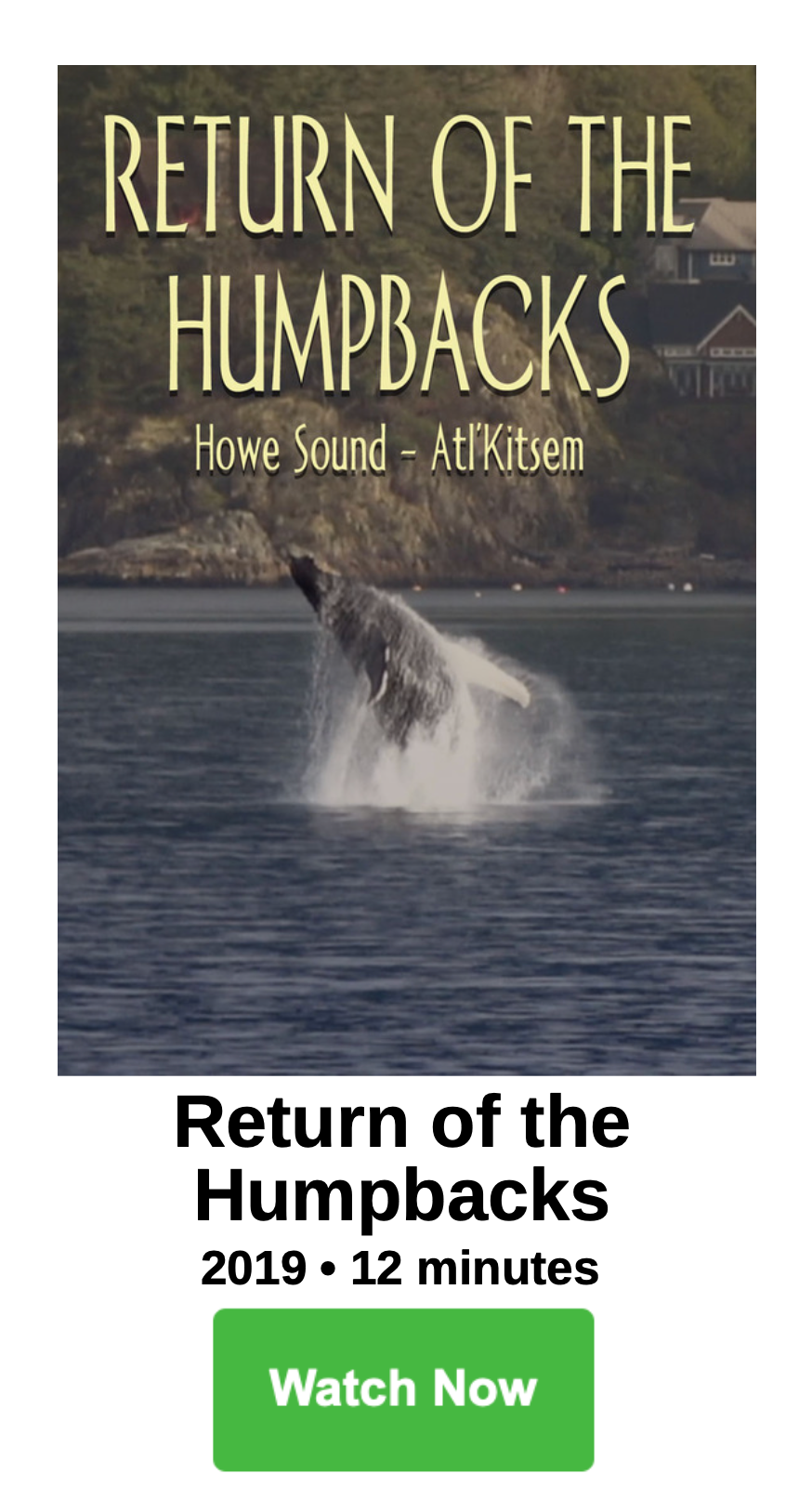 Return of the Humpbacks