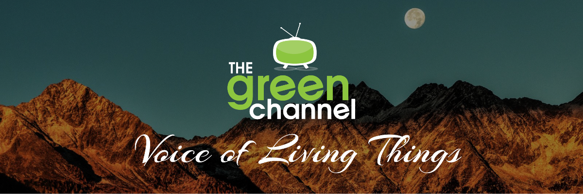 The Green Channel Newsletter 12 Header